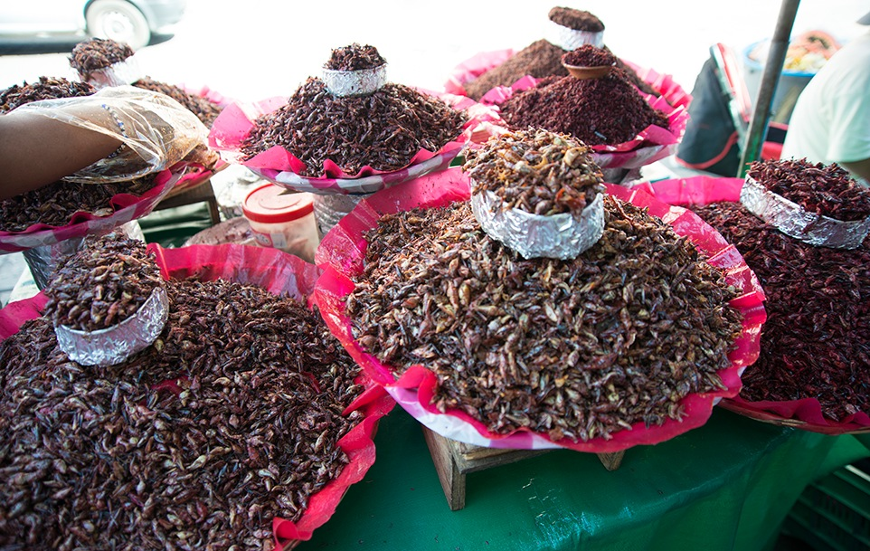 Grasshoppers in Oaxaca, Mexico